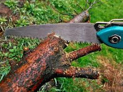 Hand sawing branches to haul away